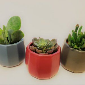 Other - Set of 3 Succulents in Colorful Ceramic Pots